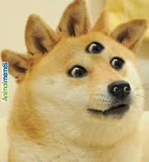 The Doge Meme - doge dog meme memes info and news cryptocurrency