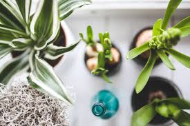 Buy House Plants Freshen Up Your Home With These 6 Houseplants That Purify Indoor