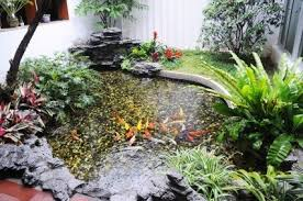 Types Of Fish For Garden Ponds - controlling algae in a pond thriftyfun