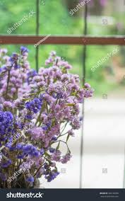 dry statice flower purple limonium florals stock photo 386190058