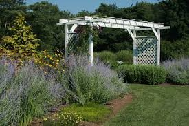 russian native plants lovely russian sage garden plants wearefound home design