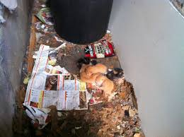 found a litter of kittens in my alley in fishtown anyone have any