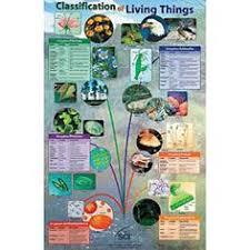 classifications sbi3u plants pinterest