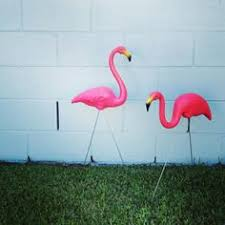 f for flamingos i ve always liked them or maybe the plastic