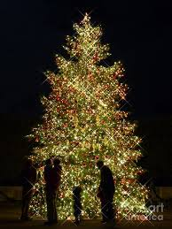 168 best christmas at longwood gardens images on pinterest