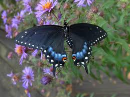 butterfly and moth presentations audubon society of kalamazoo