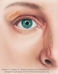 Eye Ducts Anatomy Valve Of