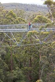 tree top walk explore parks wa parks and wildlife service