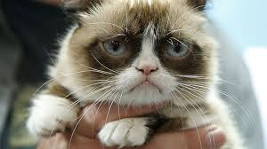 Grumpy Cat Has Died Youtube - 5 celebrities who may be earning less than grumpy cat abc news