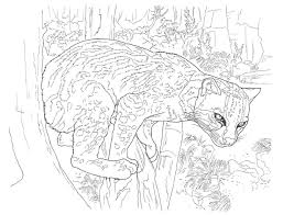 desert animals coloring pages sonora mud turtle coloring pages