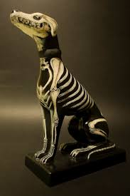 the 25 best dog skeleton ideas on pinterest animal anatomy cat