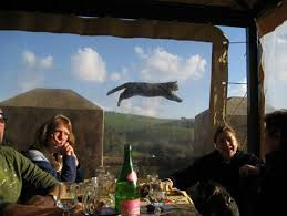 Flying Cat Meme - flying cat photobomb imgur