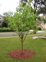 the troubles tree jbird s