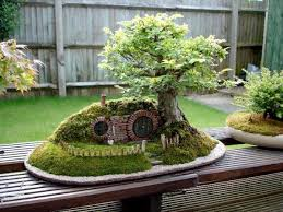 were to buy bonsai trees india store or local store my