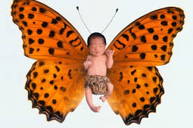 butterfly and other nature names from the sky