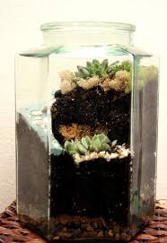 397 best terrariums images on pinterest terrarium ideas cacti
