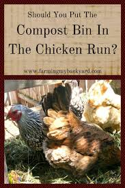 should you put your compost bin in the chicken run farming my