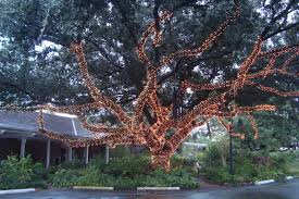 how to wrap christmas lights around a tree thick and thin air tree wrapping