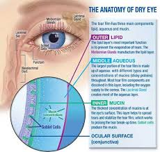 Eye Ducts Anatomy Ez Eyecare Inc Optometry In Boston Ma Usa Dry Eye Therapy
