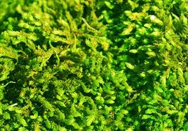 download where can i find moss solidaria garden