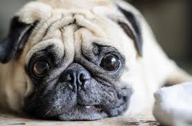 Are All Dogs Colour Blind Do Dogs See In Color New Study Shows Canines Do Depend On Color