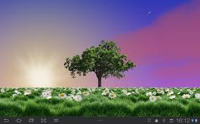summer trees live wallpaper android apps on play
