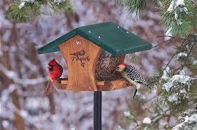 triyae com u003d winter backyard birds various design inspiration