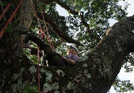 amazon tours brazil off the beaten path tropical tree climbing