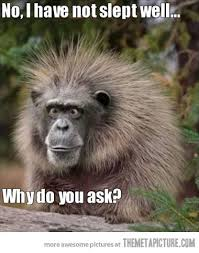 Monkey Face Meme - ideal monkey face meme meeting your first date your blog name