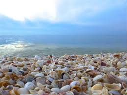 Sanibel Island Map Go Shell Hunting On Sanibel Island Florida Travel America And