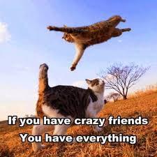 Crazy Friends Meme - 67 amazing friends memes for you