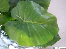wholesale 13 leaves pcs taro leaves plants artificial tree