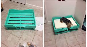 pedane per cani come costruire un letto per con il pallet meteofan