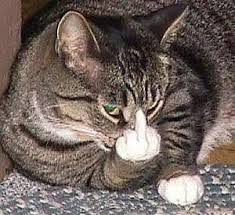Middle Finger Cat Meme - cat middle finger blank template imgflip