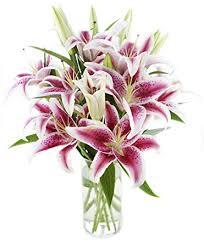 stargazer bouquet pink stargazer bouquet 13 stems the kabloom