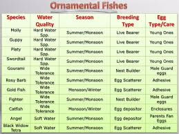 market potential of ornamental fishes in gujarat problems prospects
