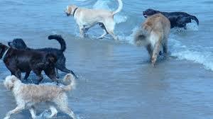 dog daycare floor plans dog friendly evanston il