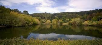 Mt Lofty Botanic Gardens 5 Things To Enjoy At Mount Lofty Botanic Garden This Winter