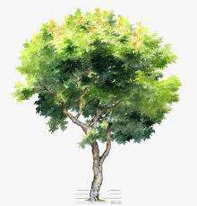tree png images 76 506 png resources with transparent