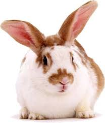 rabbits my animal collection pinterest rabbit