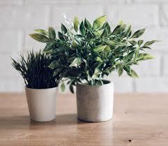 plantes bureau les plantes une ressource verte avec des vertus au bureau