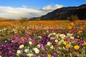 anza borrego borrego springs anza borrego desert state park anza borrego