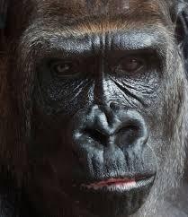 rainforest animals animal facts encyclopedia