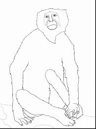 beautiful monkey coloring pages kids monkey coloring