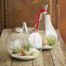 crystal glass apple pear fruit planter flower vase terrarium