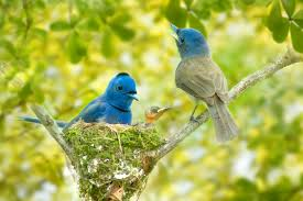 30 cute bird pictures with most beautiful colors entertainmentmesh