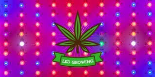 chambre de culture led led horticole cannabis cool led powered buds with led