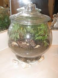 vonda u0027s cabbages and things making a terrarium