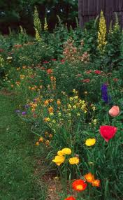 perennial cottage garden design lots of different poppies and