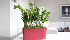 office plant gellerts the joy of plants home